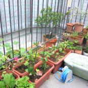 ベランダ菜園日記2012、はじめます☆