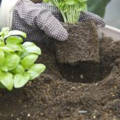 野菜は早起き♪朝日をよく浴びると元気に育つ!